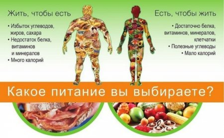 Какое питание вы выбираете?