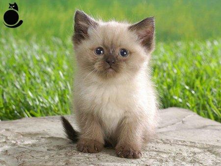 4 октября Международный день защиты животных.