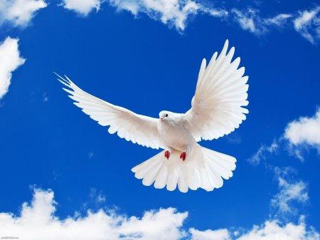 Акция «Голубь мира – Голубь Победы».